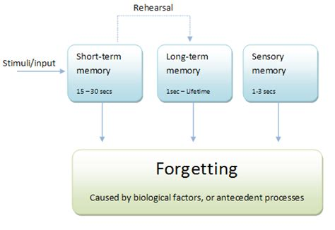Memory Wstor quot compare and contrast the three models of memory quot writework