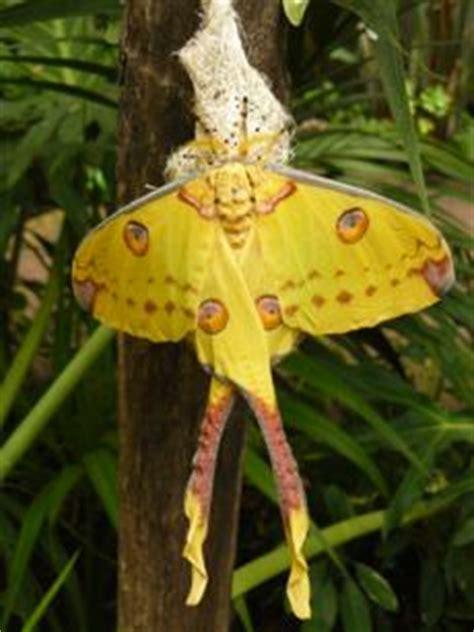 la casa delle farfalle catania t c m italia scopri il turismo italiano biglietteria