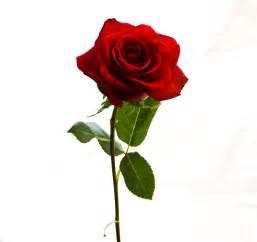 imagenes de rosas rojas para una madre el radar de sarri 224 catalunya 233 s un llibre i una rosa