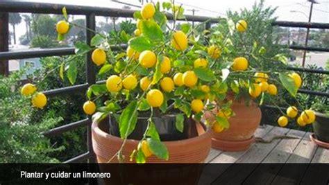 Sale Sutil Mini c 243 mo plantar y cuidar un limonero diariodeciencias ar