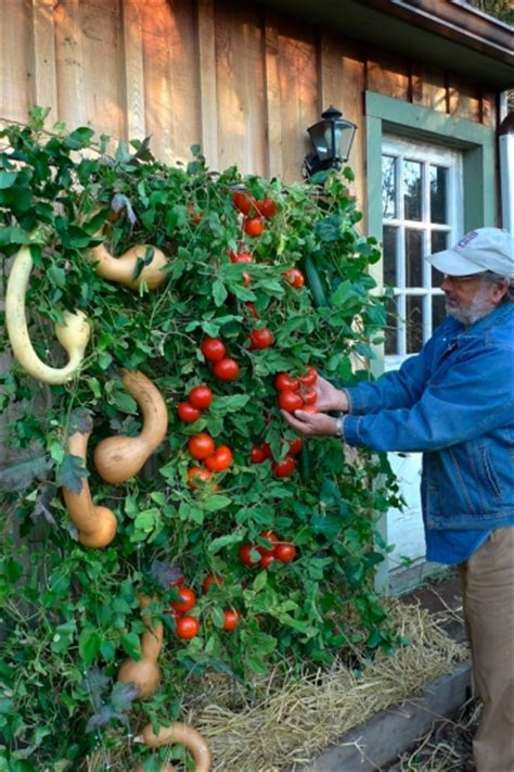 Vegetable Planterbag Raised Bed Tomato Print living wall perhaps the ultimate raised bed garden home and garden journaltimes