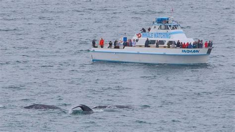 boat tour redondo beach redondo beach whale watch all you need to know before