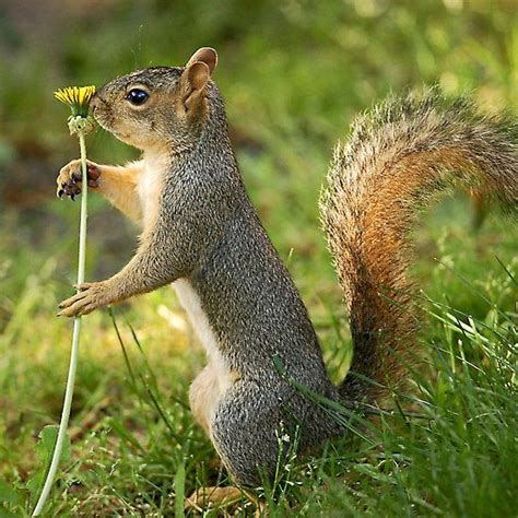 squirrel with a flower treasures pinterest