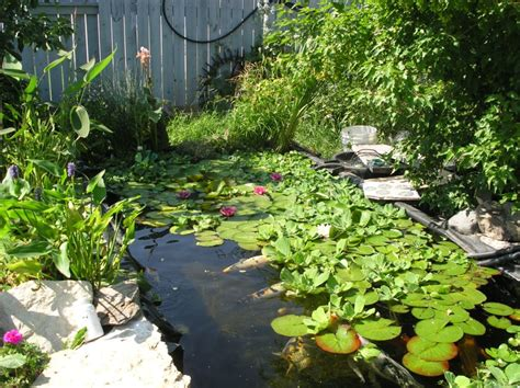 water ponding in backyard pond photos pictures garden pond photo gallery water plants for ponds