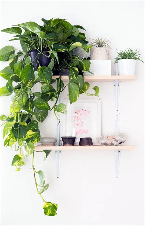 draping plants 1000 images about planties on pinterest planters
