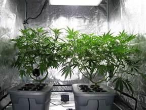 bedroom grow room indoor marijuana grow rooms green cultured cannabis college