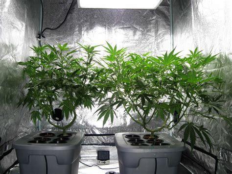 grow rooms for indoor marijuana grow rooms green cultured cannabis college