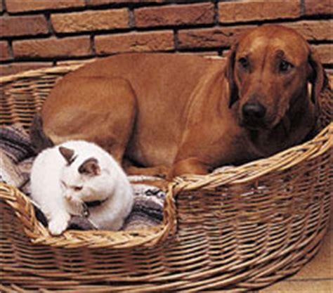 distemper vaccine dogs distemper in dogs vaccine schedule