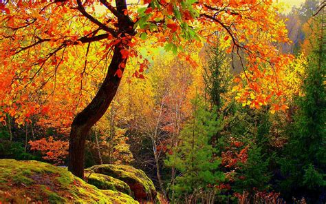 colorful trees colorful autumn trees wallpaper 44829