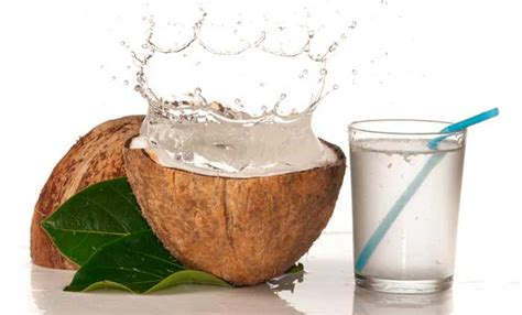 can dogs drink coconut water 20 coconut water frequently asked questions
