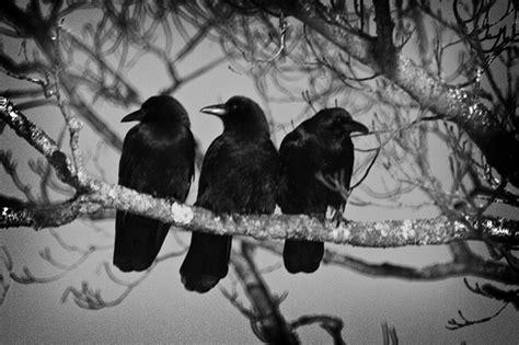 Three On A by 3 Crows 8 Flickr