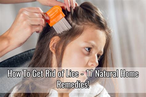 how to get rid of lice 17 home remedies home