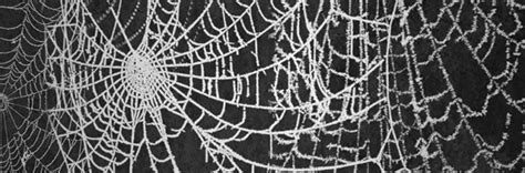 spider web pattern photoshop a collection of free spider web brushes naldz graphics