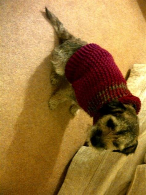 knit dog sweater pattern in the round 1000 images about loom knit for pets on pinterest free