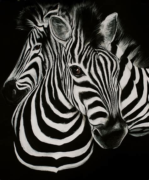 zebra backgrounds 4 wide background and wallpaper home