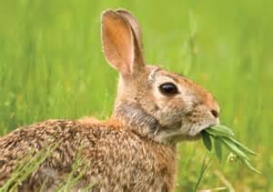 herbivores plant eaters teeth of herbivorous animals plant
