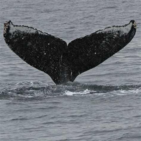 the whales are migrating what can you expect to see