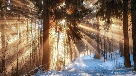germany winter february forest branches sun rays light