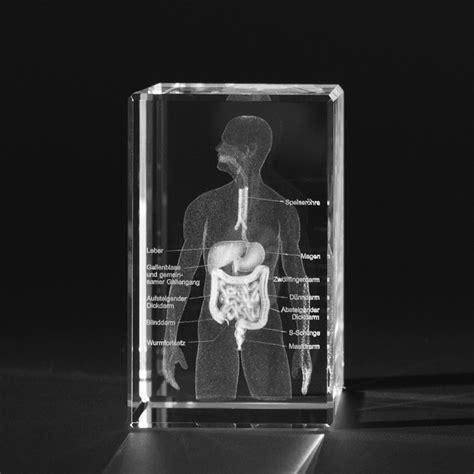 3D Anatomie Modell – 3D Oberkörper des Menschen mit ... Y Logo 3d