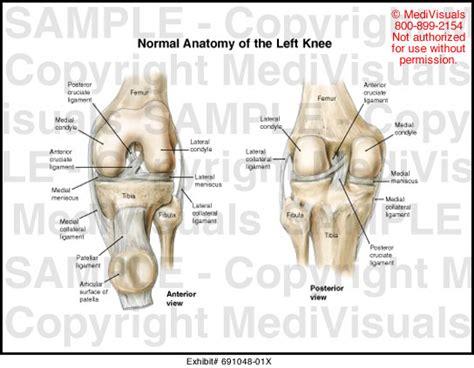 diagram of left knee knee anatomy diagram knee get free image about wiring