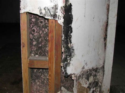 how to repair black mold removal on basement wall how
