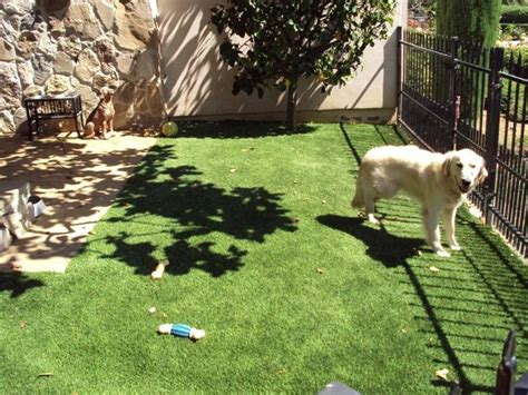 no grass backyard for dogs no grass backyard for dogs 28 images triyae com no grass backyard for dogs various