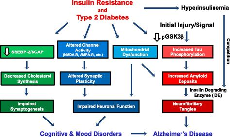 pattern recognition dopamine insulin action in brain regulates systemic metabolism and