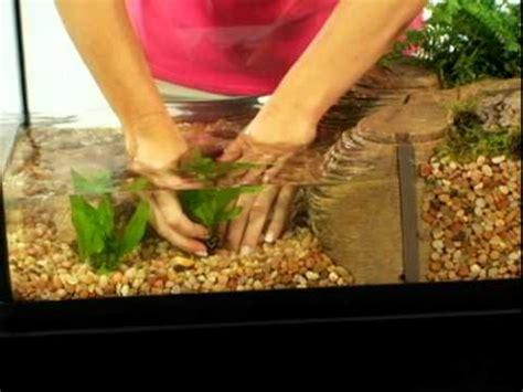 tetracare  semi aquatic turtle environments youtube