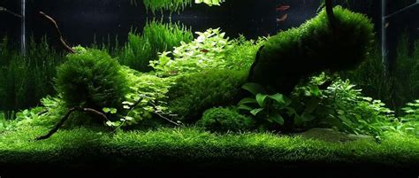 amano aquascape amano aquascape images aquascape