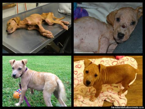 xena the warrior puppy severely puppy xena and autistic boy jonny hickey become best friends