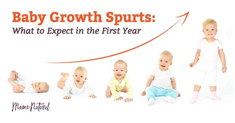 puppy growth spurts newborn growth spurt chart images free any chart exles
