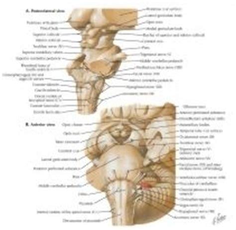 pavimento quarto ventricolo brainstem