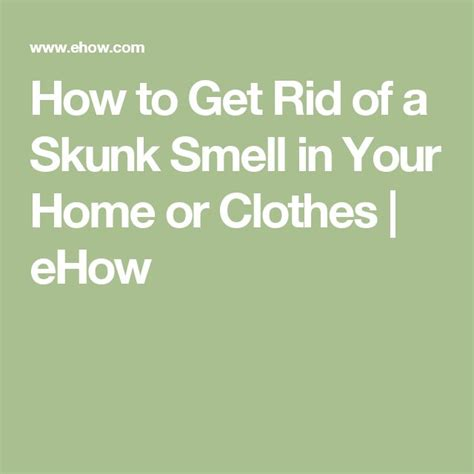 how to get rid of bad odor in house 1000 ideas about skunk smell on pinterest skunk smell remover skunks and skunk smell in house