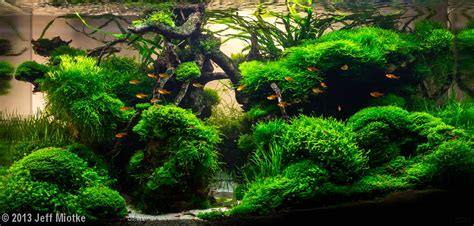 java moss aquascape can u label the mosses in here plz the planted tank forum