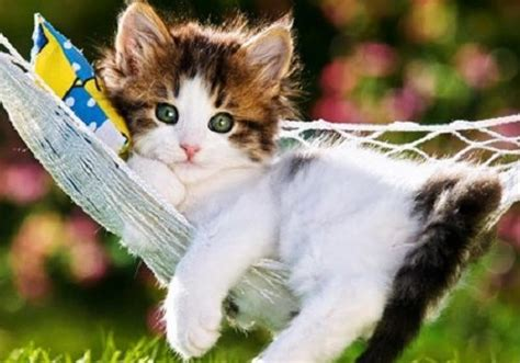 imagenes para perfil hermosas fotos bonitas de perfil para whatsapp imagenes de frases