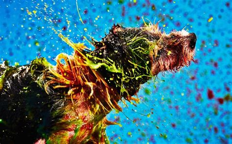 dogs create abstract paintings  shaking  toxic paint