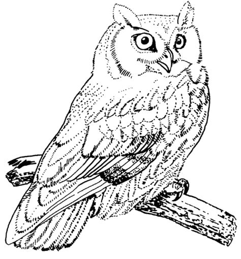 coloring pages of big owl big owl coloring page printable coloring pages
