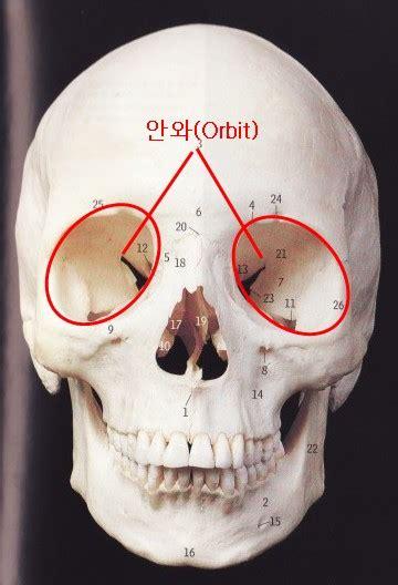 libro descender volume 4 orbital 치아로그 계측점 landmarks vol 4 orbitale