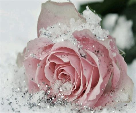 Mukena Frozen Snow Pink L 1000 images about roses in snow on literature