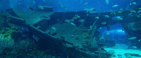 sunken treasures maritime archeologist sets   explore  ships buried beneath