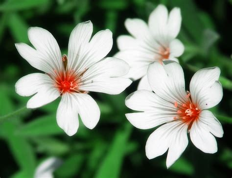 Types Of Garden Flowers 100 Types Of The Most Beautiful White Flowers For Your Garden Flowers Flower And Beautiful