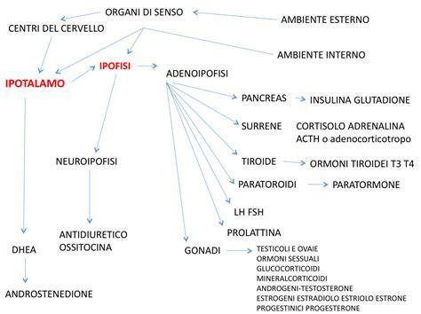progesterone naturale alimenti medicina amica la prevenzione cancro e dell