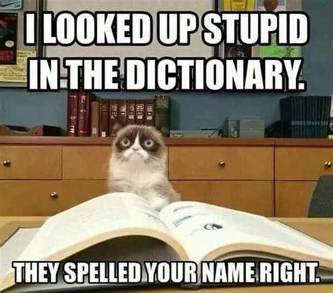 Sarcastic Cat Meme - best 20 grumpy meme ideas on pinterest grump cat sad