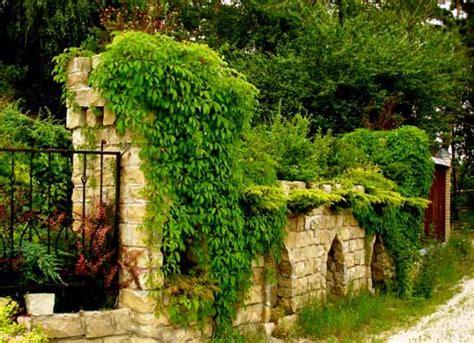 green fence designs plants  beautify garden design  yard landscaping