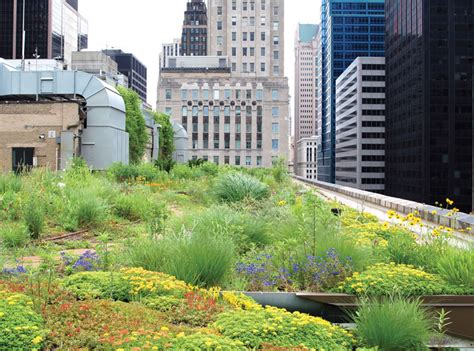 green roofs bringing nature to your doorstep burnham plan centennial from city beautiful to green