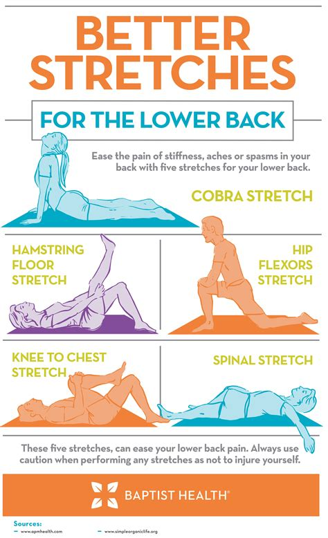 best exercise website lower back stretches to help keep you free