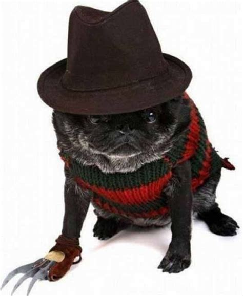 costume for pugs costume for pugs omg for the of pugs