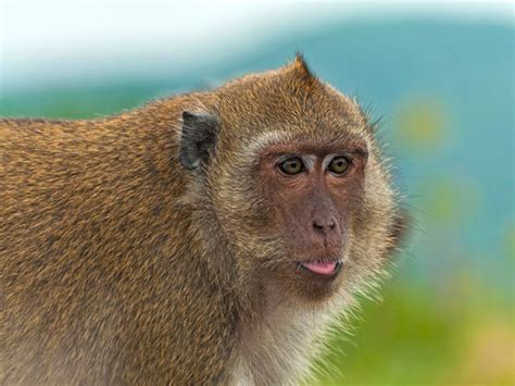 funny monkey pictures   time