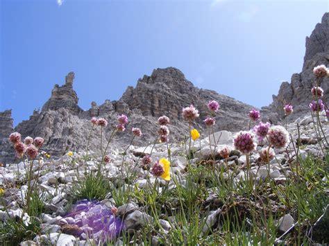 immagini di fiori di montagna fiori di montagna foto immagini paesaggi montagna