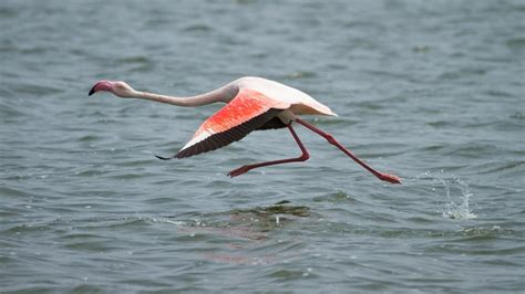 flamingo mobile wallpaper flamingo wallpapers animal hq flamingo pictures 4k